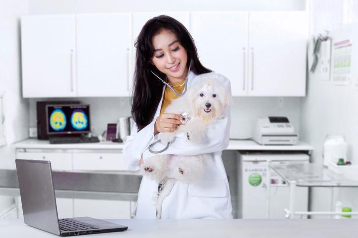clinique veterinaire de garde à Nantes