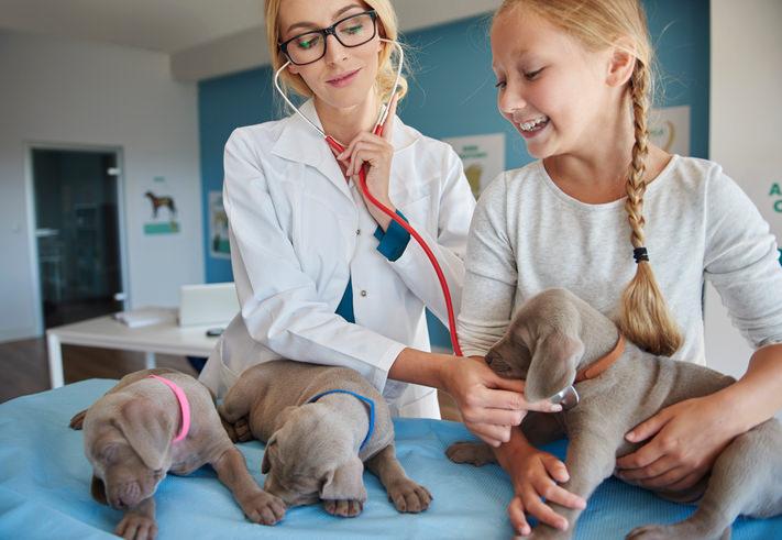 clinique veterinaire de garde à Strasbourg